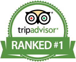 North Cape Sightseeing Tour ranked Number 1 on TripAdvisor